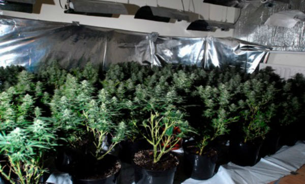 Investment Property Turned Cannabis Farm